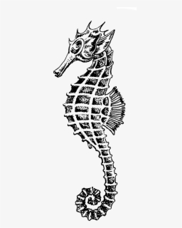Seahorse Clipart Black And White Outline