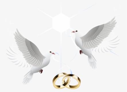 المدرسة تصنيف سوف تتحسن سكرابز زواج خواتم Outofstepwineco Com