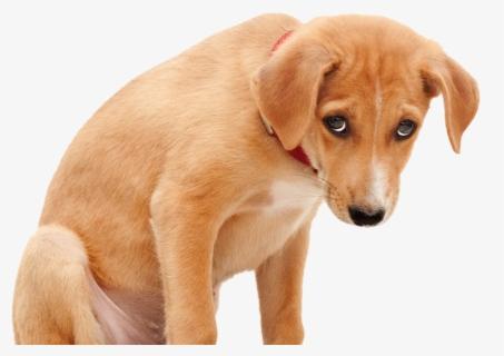 Dog Clip Art Sadness