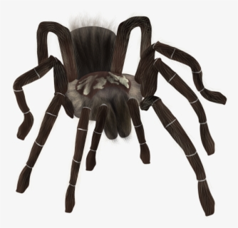 Free Tarantula Clip Art With No Background Clipartkey