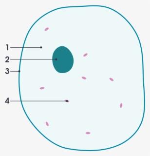 Clip Art Ribosomes Diagram - Cytoskeleton In Animal Cell ...