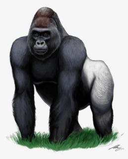Oriental, gorille plaine, gorille, gorille, graueri, tête, mâle Banque  d'Image   ys1-1424300   Fotosearch
