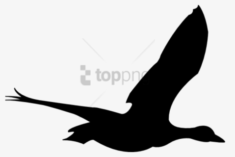 Sea Bird Clipart Animated Bird Flying Animation Png Free Transparent Clipart Clipartkey