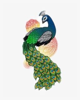 Pavo Easy Drawings Of Peacock Free Transparent Clipart Clipartkey