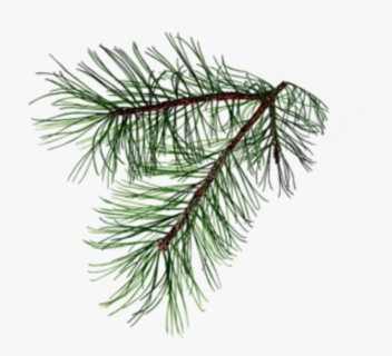 Clip Art Black and White Needle Pine Garland