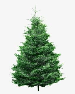 Meet Me Under The Mistletoe Svg Cut File 0 Meet Me Under The Mistletoe Free Transparent Clipart Clipartkey