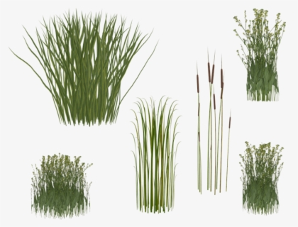 Transparent Reed Clipart Transparent Background Long Grass Png Free Transparent Clipart Clipartkey