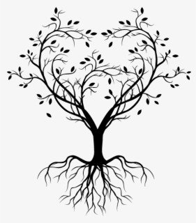 Branch Tree Drawing , branches transparent background PNG clipart    HiClipart