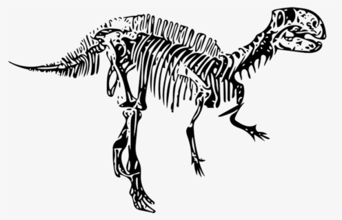 Fossil Clipart Dino - Dinosaur Skeleton Clip Art - Free Transparent PNG  Clipart Images Download