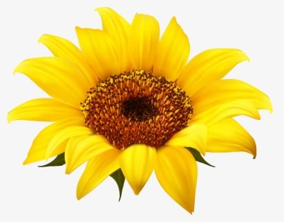 Flower Clip Art at Clker.com - vector clip art online, royalty free &  public domain