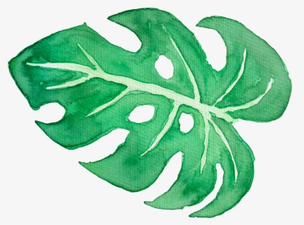 Tropical Png Tumblr Transparent Tropical Leaves Png Free Transparent Clipart Clipartkey Are you searching for tropical leaves png images or vector? transparent tropical leaves png free