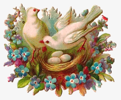 Bird Nest Clipart PNG Bird Nest Vintage Imagefor Invitations | Etsy