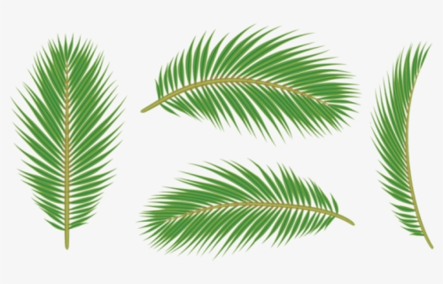 Free Tropical Leaf Clip Art With No Background Clipartkey Here you can explore hq leaves border transparent illustrations, icons and clipart with filter setting like size, type, color etc. free tropical leaf clip art with no