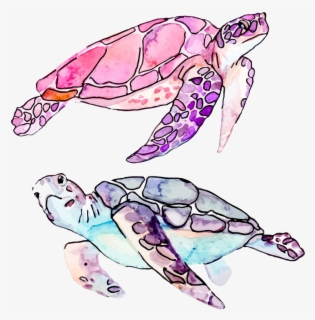 Drawing Of A Turtle For Kids Turtle Drawing Png Free Transparent Clipart Clipartkey